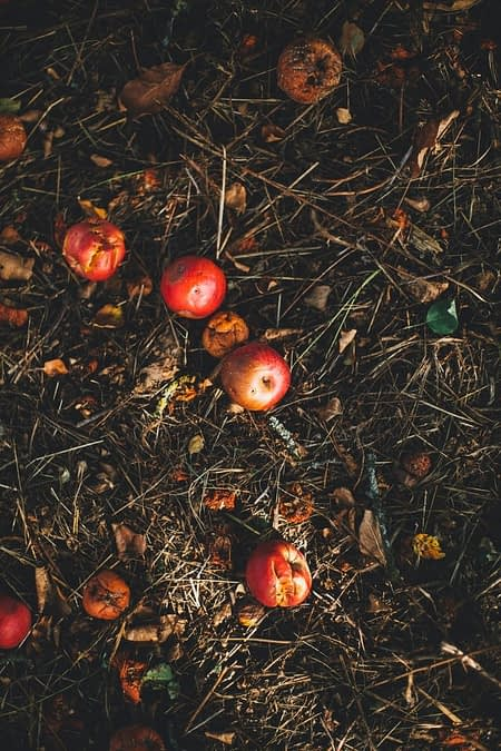 What to do with your restaurant's food scraps and waste
